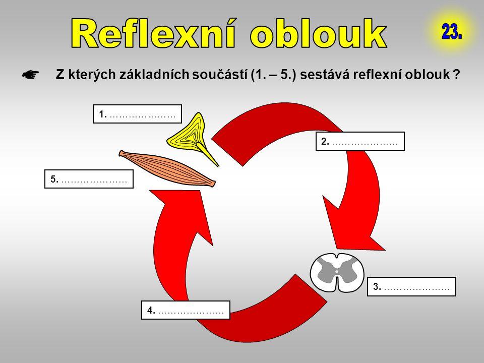 Reflexní oblouk 23. Z kterých základních součástí (1. – 5.) sestává reflexní oblouk 1. ………………… 2. …………………