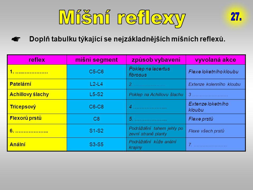Míšní reflexy 27. Doplň tabulku týkající se nejzákladnějších míšních reflexů. reflex. míšní segment.