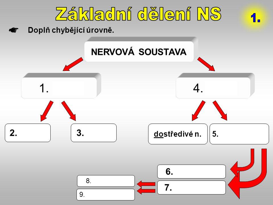 Základní dělení NS 1. 1. CNS 4. PNS NERVOVÁ SOUSTAVA 2.mozek 3.mícha