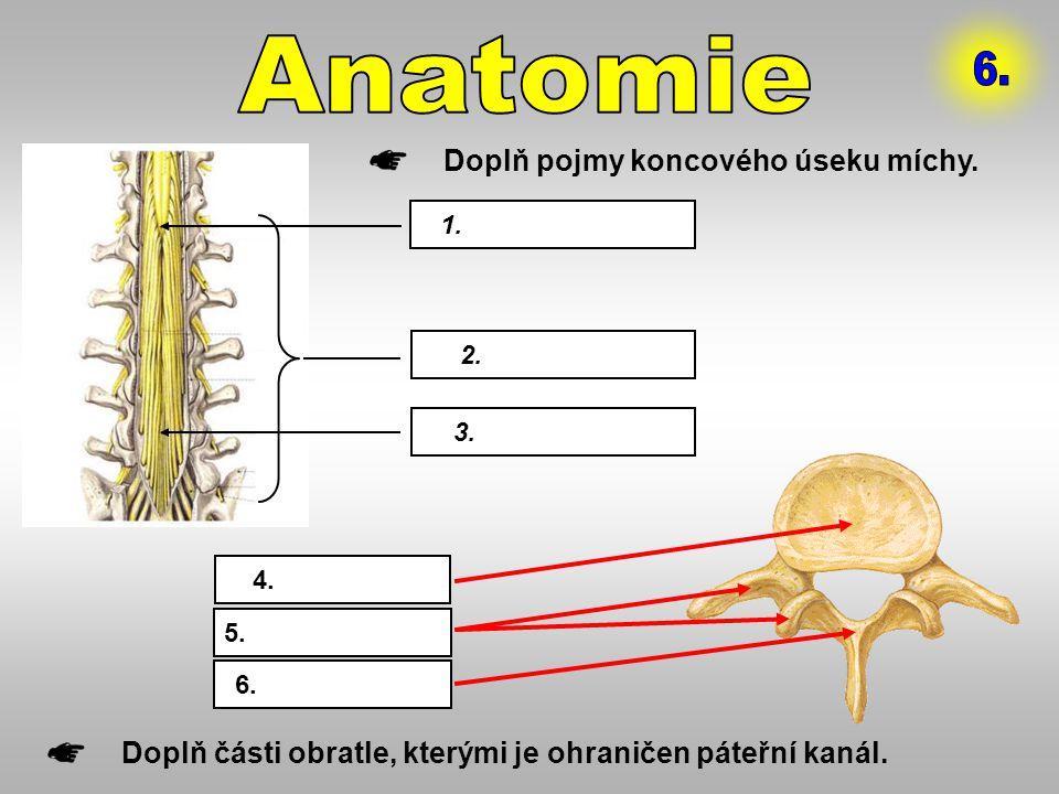 Anatomie 6. Doplň pojmy koncového úseku míchy.