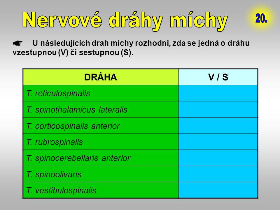 Nervové dráhy míchy 20. DRÁHA V / S T. reticulospinalis S