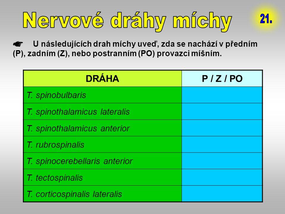 Nervové dráhy míchy 21. DRÁHA P / Z / PO T. spinobulbaris Z