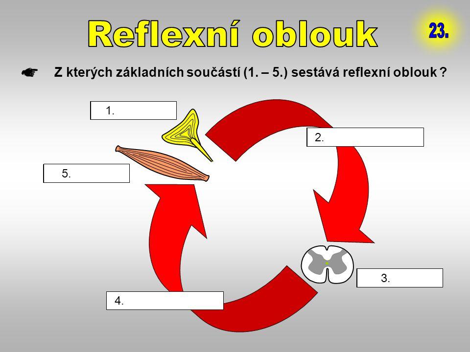 Reflexní oblouk 23. Z kterých základních součástí (1. – 5.) sestává reflexní oblouk 1. receptor.