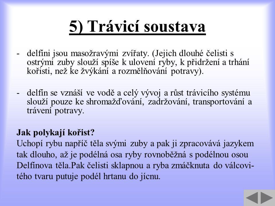 5) Trávicí soustava