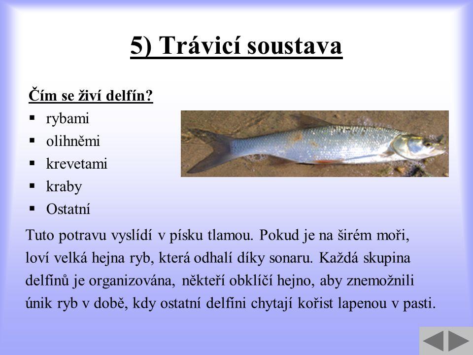 5) Trávicí soustava Čím se živí delfín rybami olihněmi krevetami