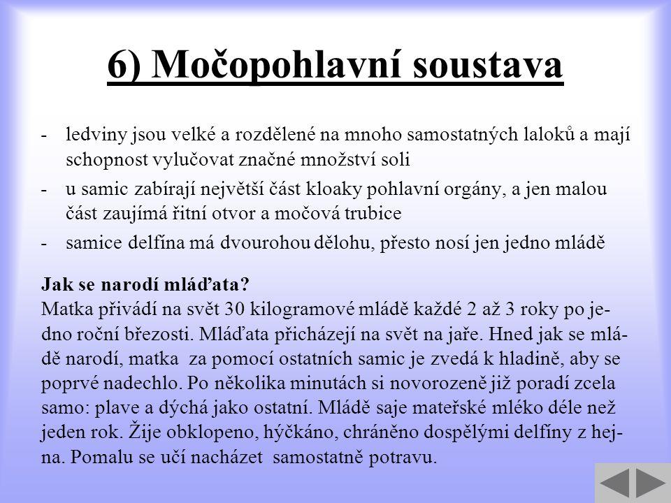 6) Močopohlavní soustava