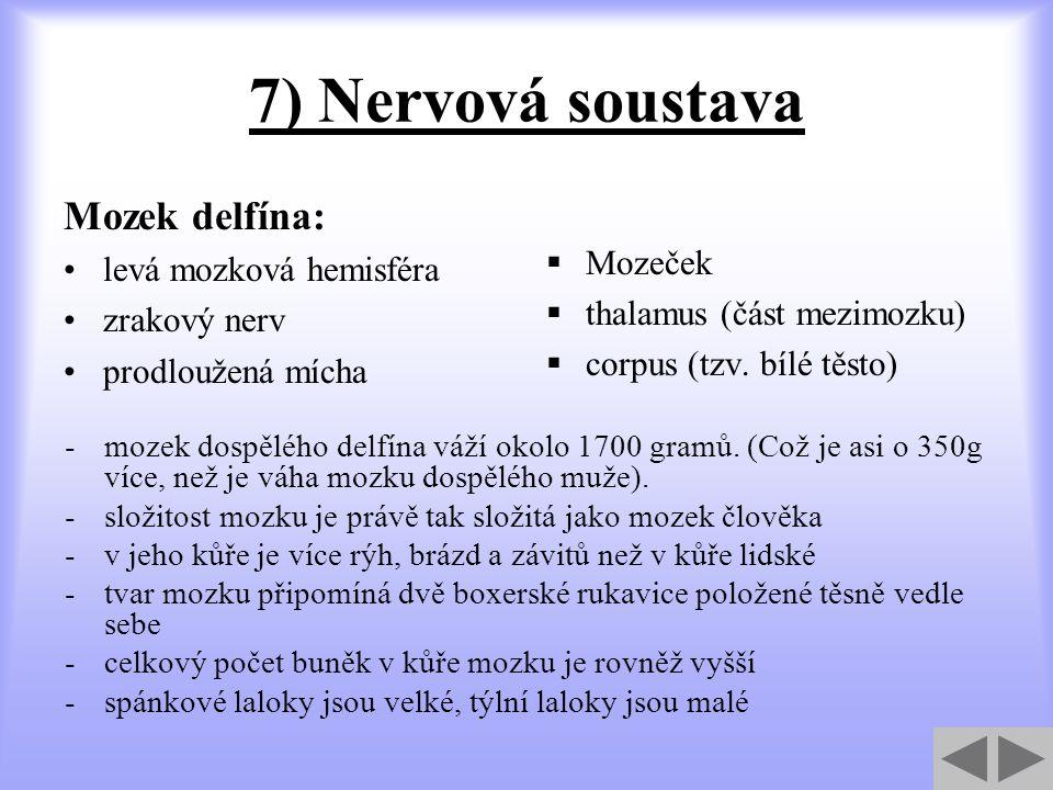 7) Nervová soustava Mozek delfína: Mozeček levá mozková hemisféra