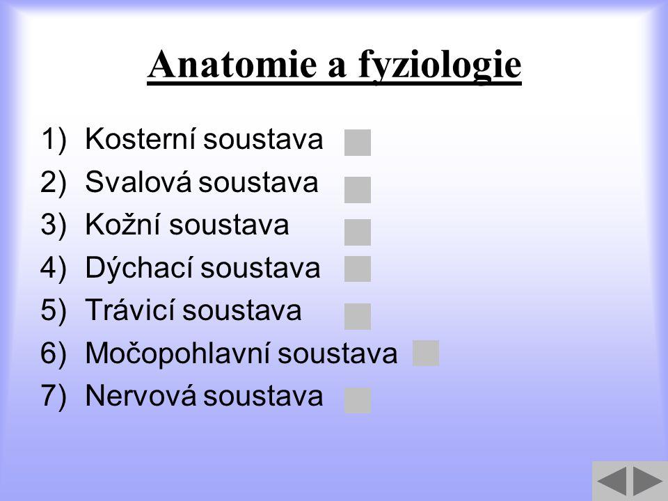 Anatomie a fyziologie Kosterní soustava Svalová soustava