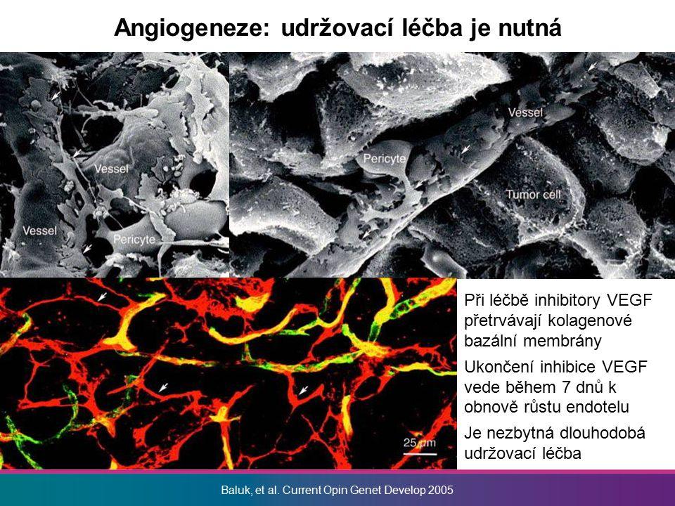 Angiogeneze: udržovací léčba je nutná