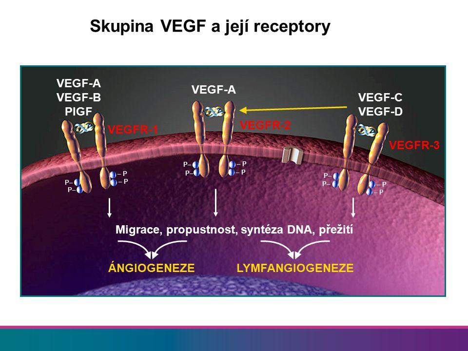 Migrace, propustnost, syntéza DNA, přežití