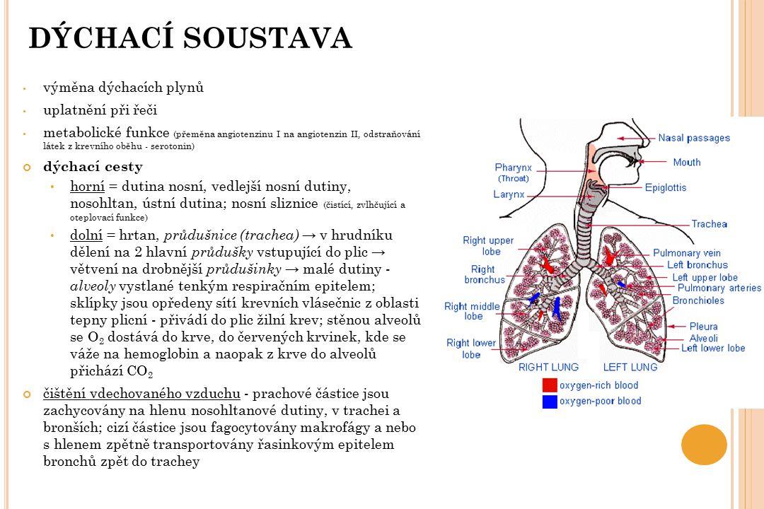 DÝCHACÍ SOUSTAVA výměna dýchacích plynů uplatnění při řeči