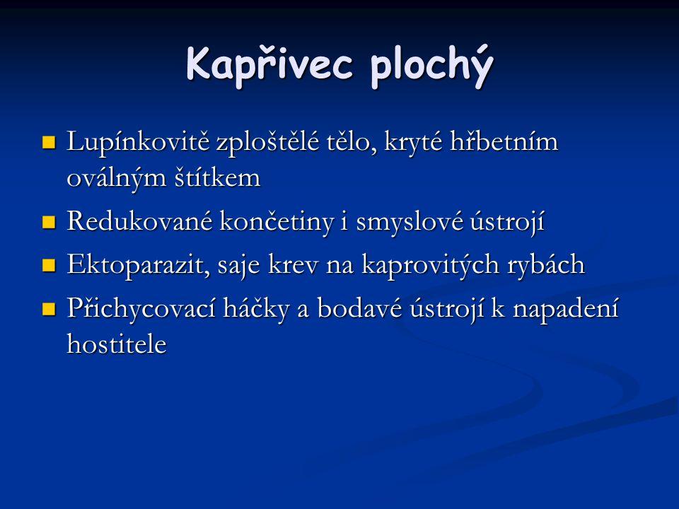Kapřivec plochý Lupínkovitě zploštělé tělo, kryté hřbetním oválným štítkem. Redukované končetiny i smyslové ústrojí.