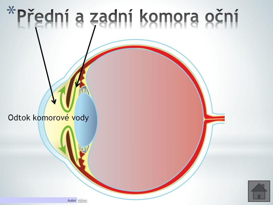 Přední a zadní komora oční