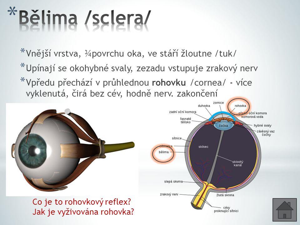 Bělima /sclera/ Vnější vrstva, ¾povrchu oka, ve stáří žloutne /tuk/