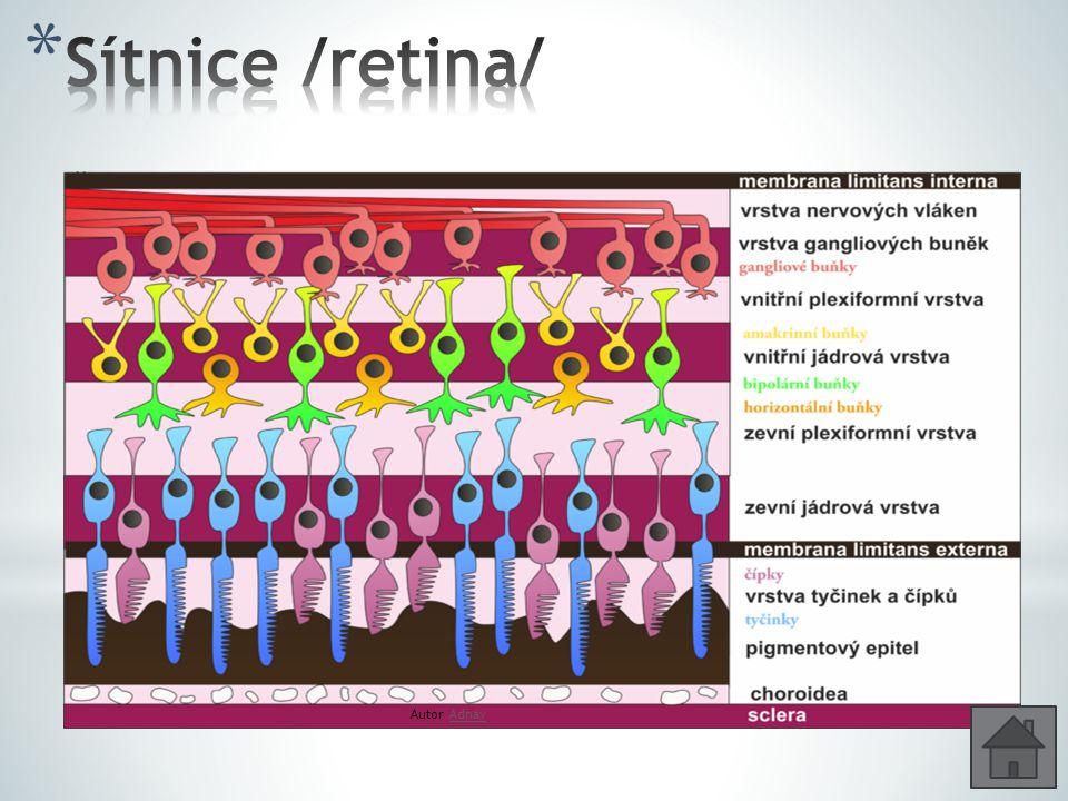 Sítnice /retina/ Vystýlá cévnatku; 0,2 – 0,4 mm Nervového původu