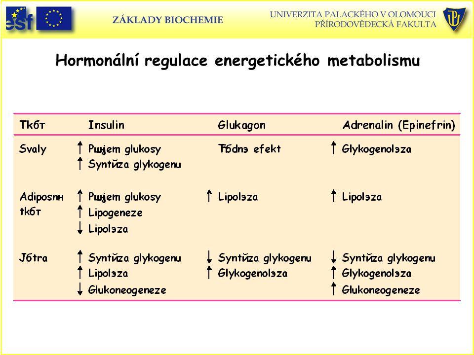 Hormonální regulace energetického metabolismu
