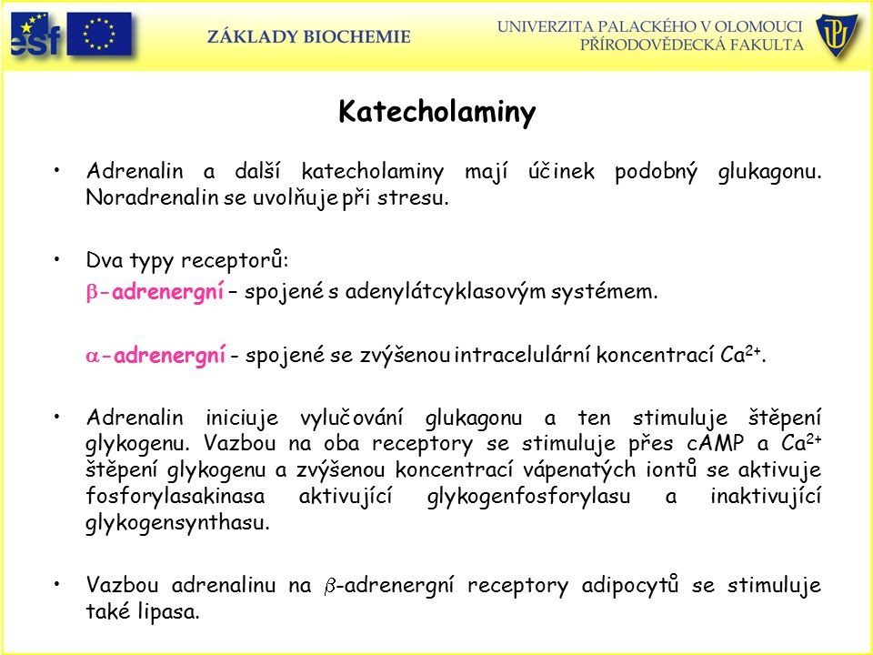 Katecholaminy Adrenalin a další katecholaminy mají účinek podobný glukagonu. Noradrenalin se uvolňuje při stresu.