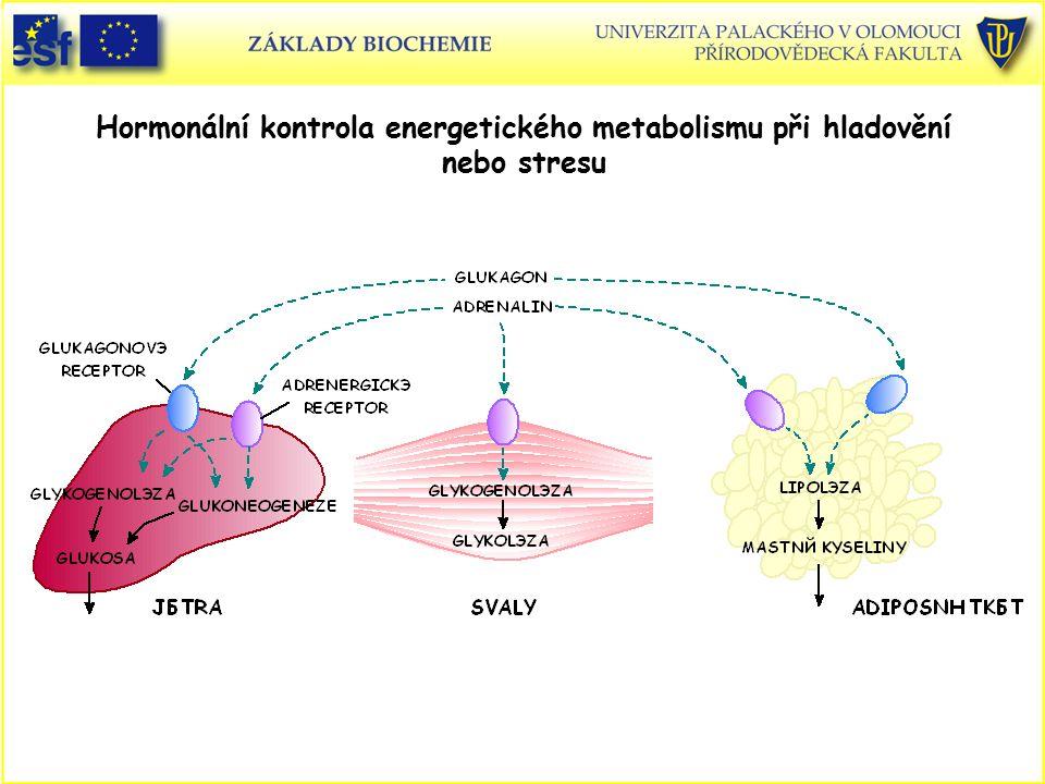Hormonální kontrola energetického metabolismu při hladovění nebo stresu