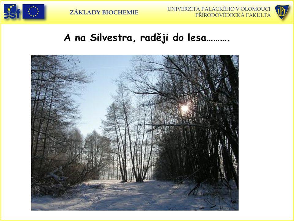 A na Silvestra, raději do lesa……….