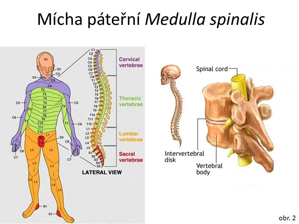 Mícha páteřní Medulla spinalis