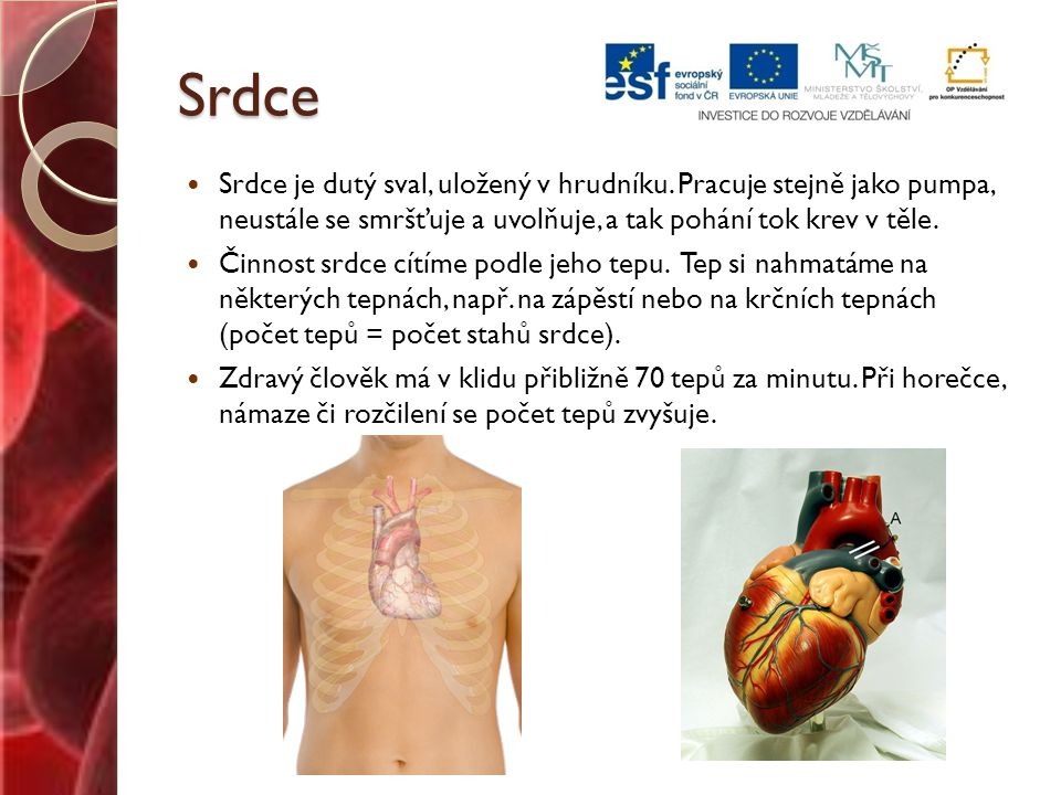 Srdce Srdce je dutý sval, uložený v hrudníku. Pracuje stejně jako pumpa, neustále se smršťuje a uvolňuje, a tak pohání tok krev v těle.