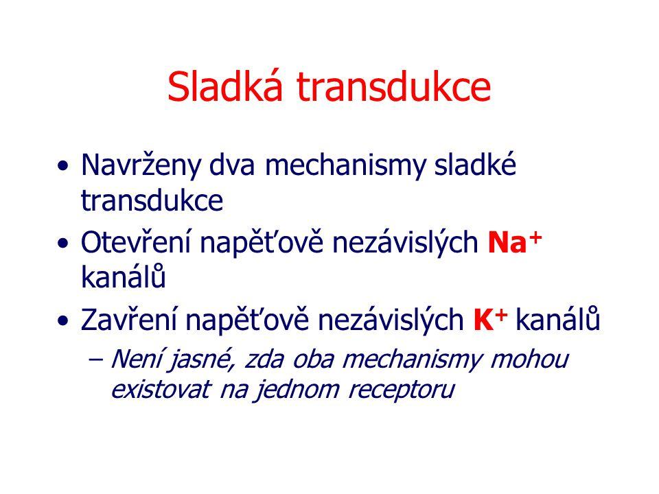 Sladká transdukce Navrženy dva mechanismy sladké transdukce