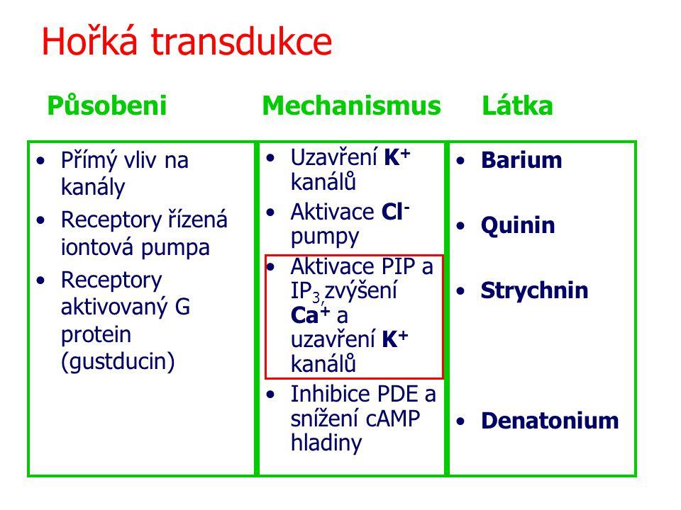 Hořká transdukce Působeni Mechanismus Látka Přímý vliv na kanály