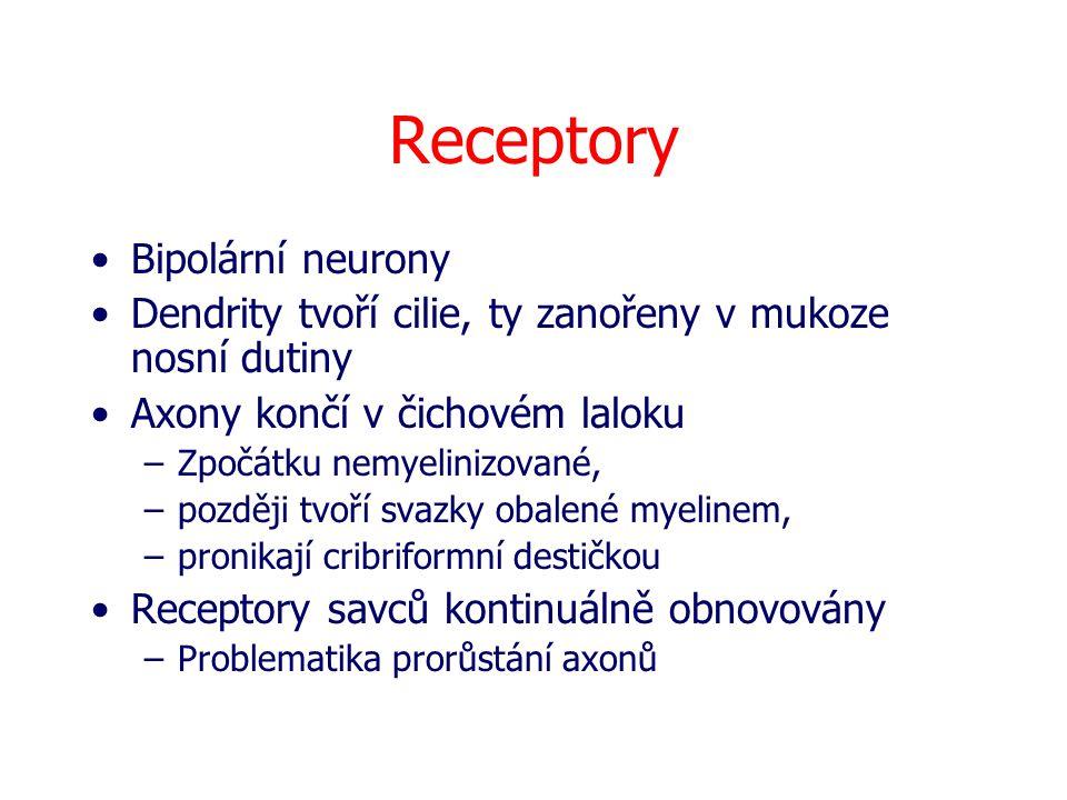 Receptory Bipolární neurony