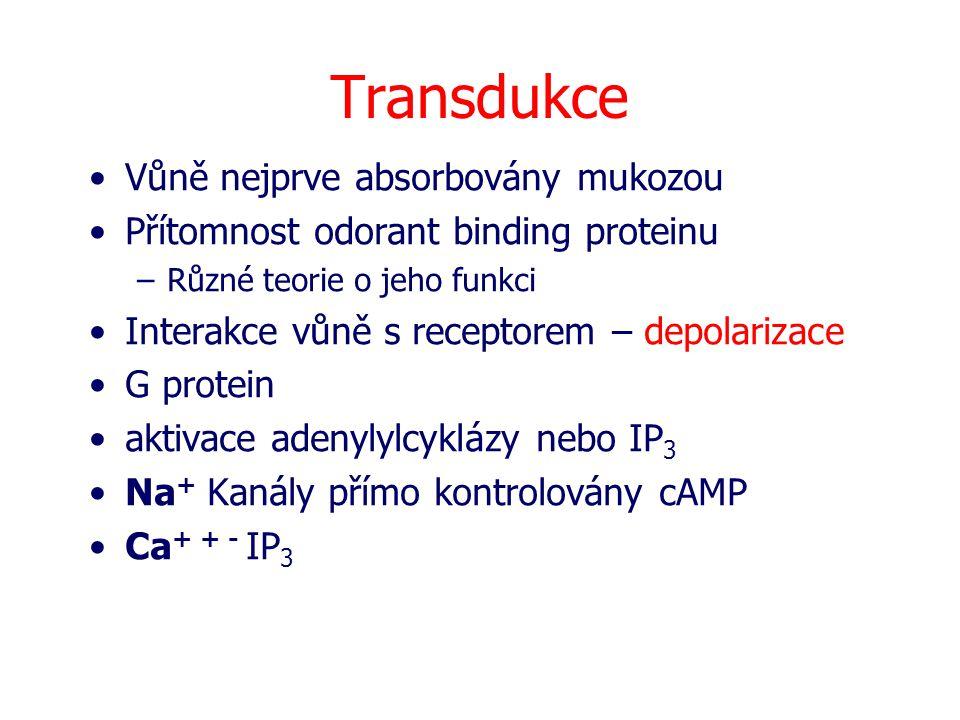 Transdukce Vůně nejprve absorbovány mukozou