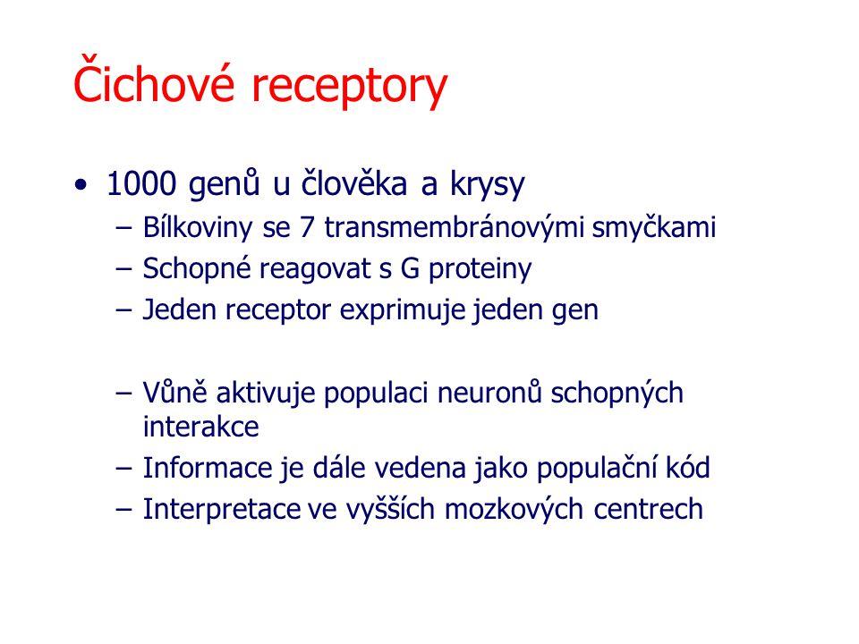 Čichové receptory 1000 genů u člověka a krysy