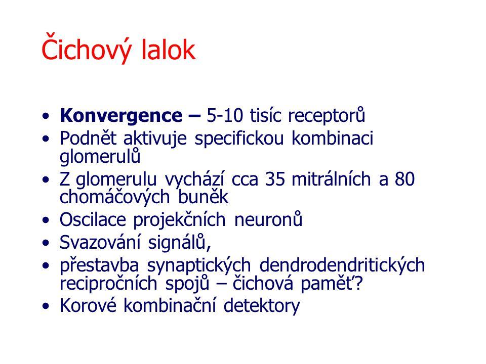 Čichový lalok Konvergence – 5-10 tisíc receptorů