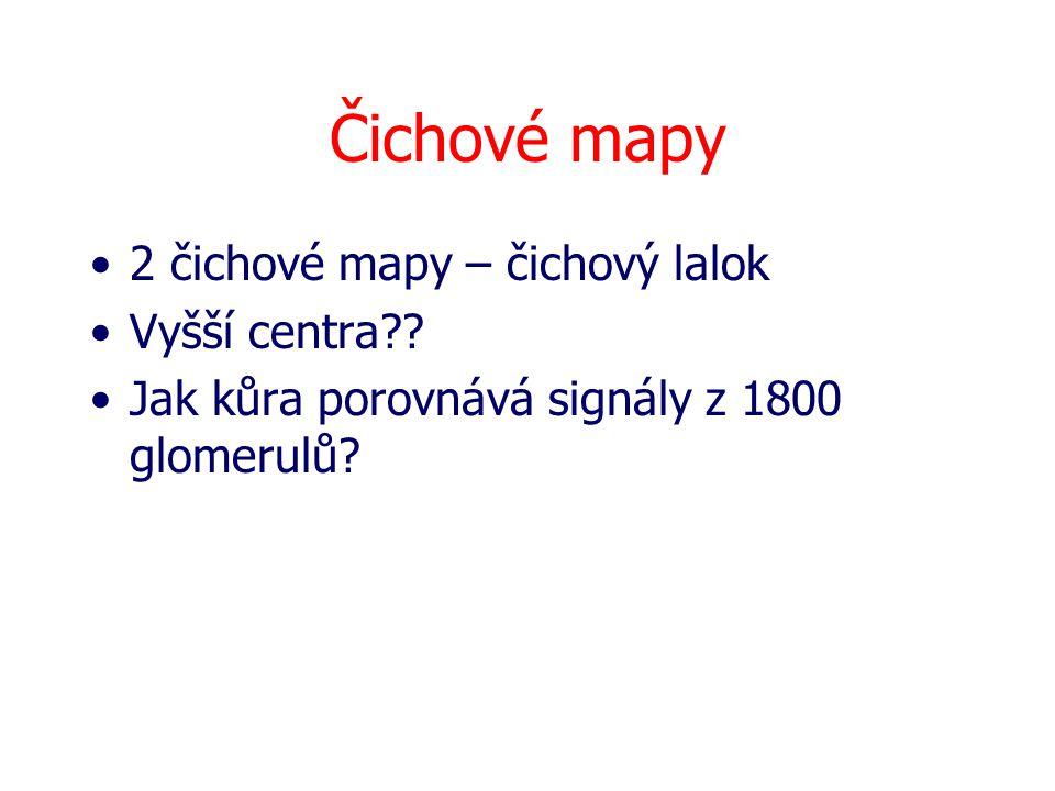 Čichové mapy 2 čichové mapy – čichový lalok Vyšší centra