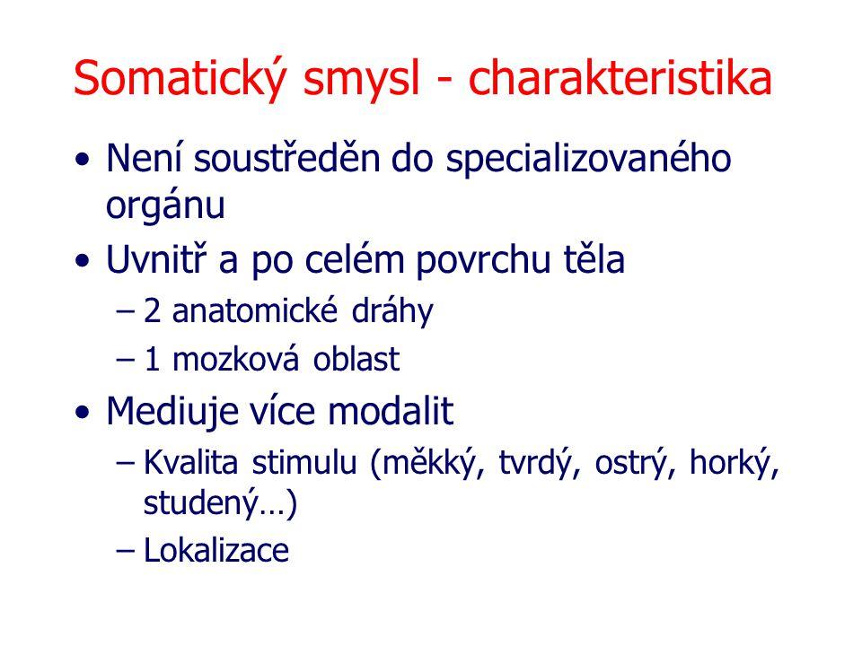 Somatický smysl - charakteristika