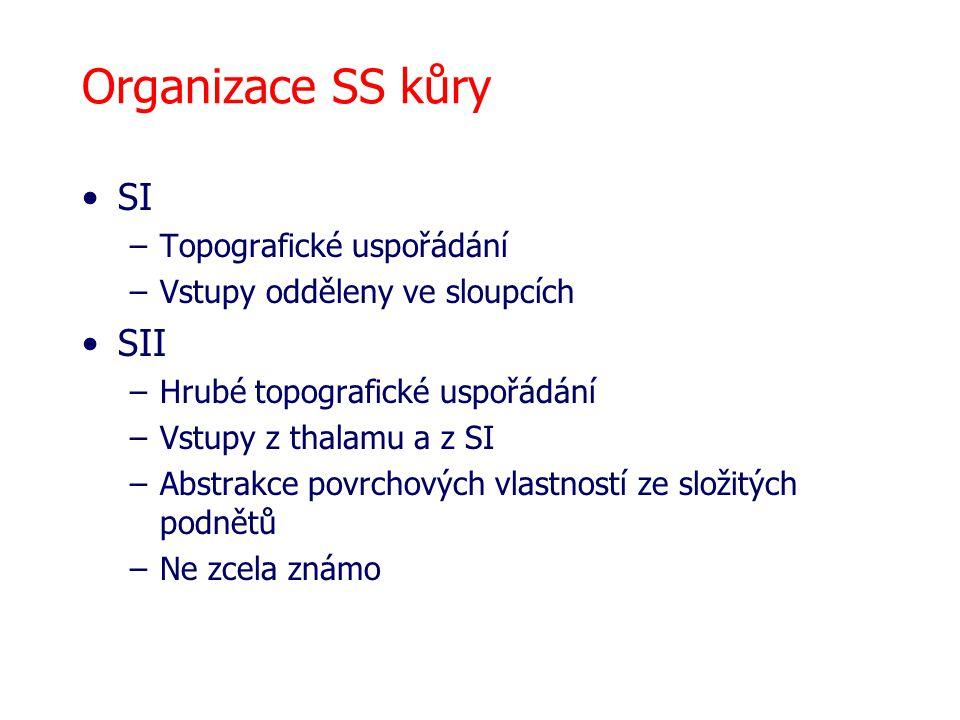 Organizace SS kůry SI SII Topografické uspořádání
