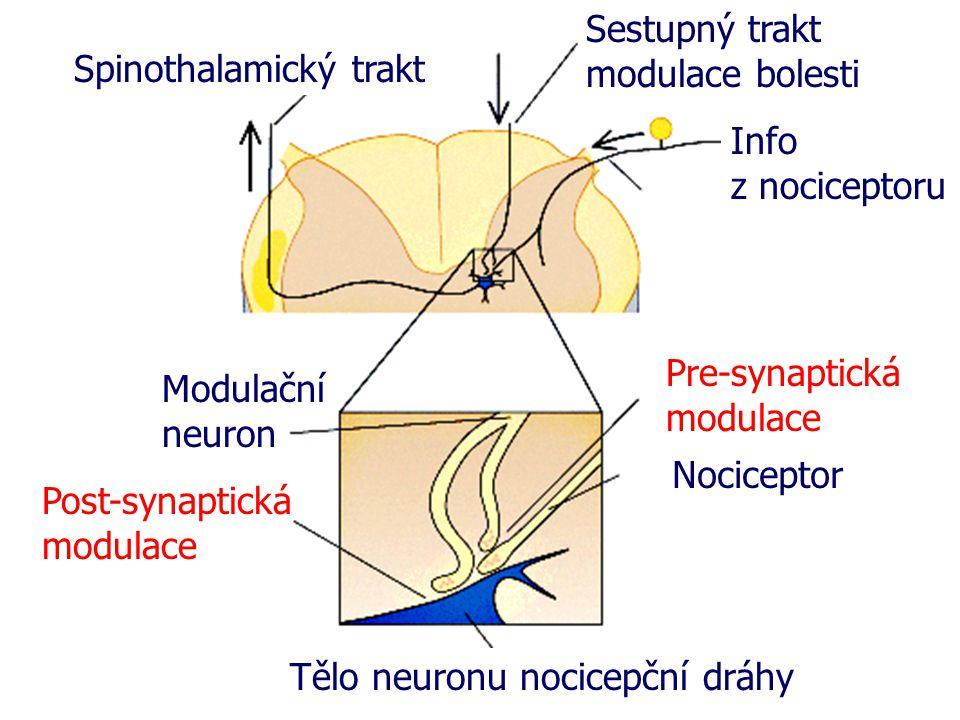 Sestupný trakt modulace bolesti. Spinothalamický trakt. Info. z nociceptoru. Pre-synaptická modulace.