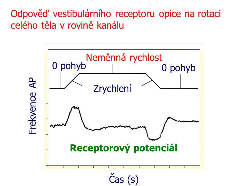 Odpověď vestibulárního receptoru opice na rotaci celého těla v rovině kanálu