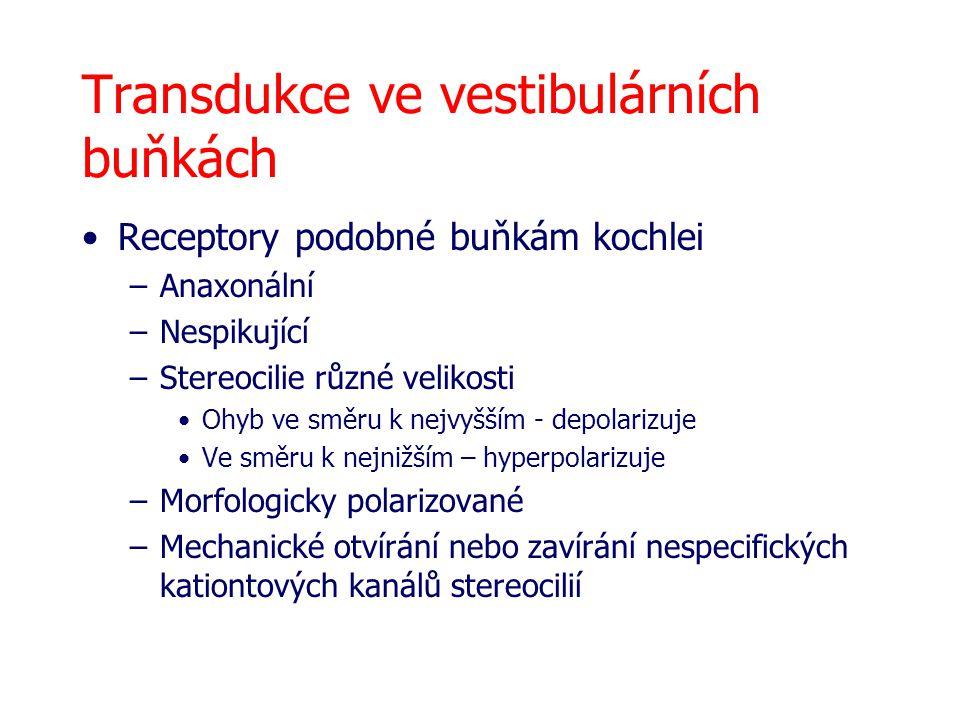 Transdukce ve vestibulárních buňkách