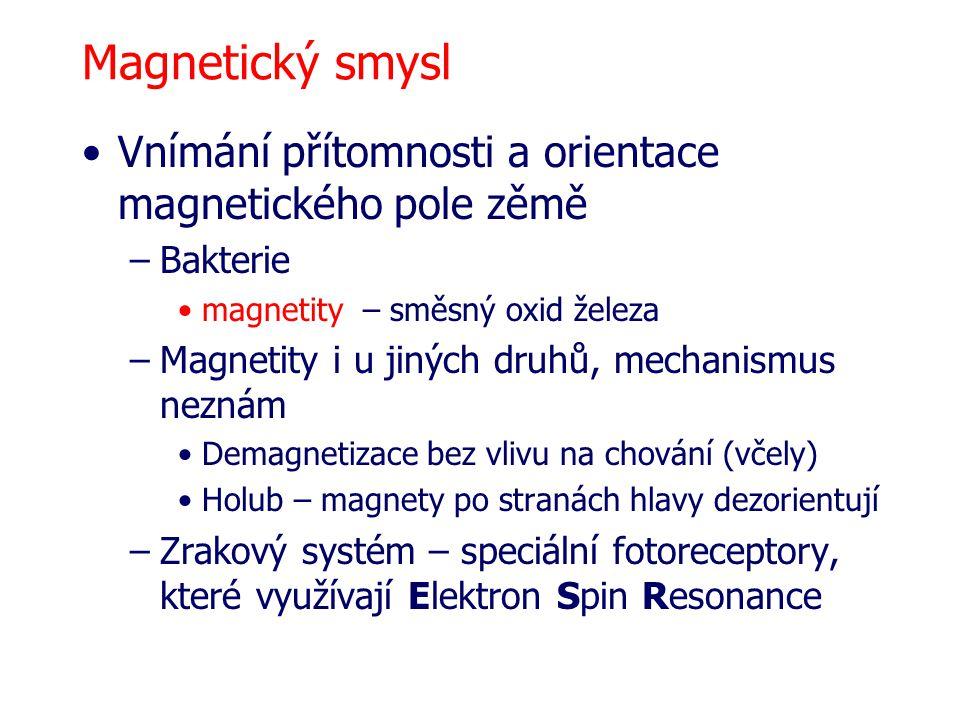 Magnetický smysl Vnímání přítomnosti a orientace magnetického pole zěmě. Bakterie. magnetity – směsný oxid železa.