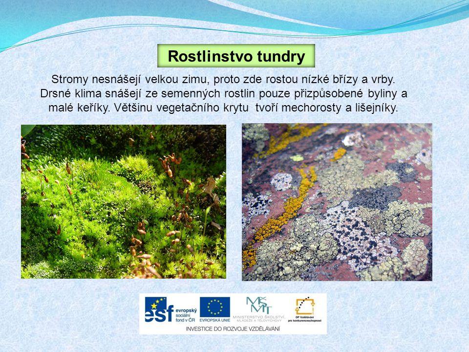 Rostlinstvo tundry