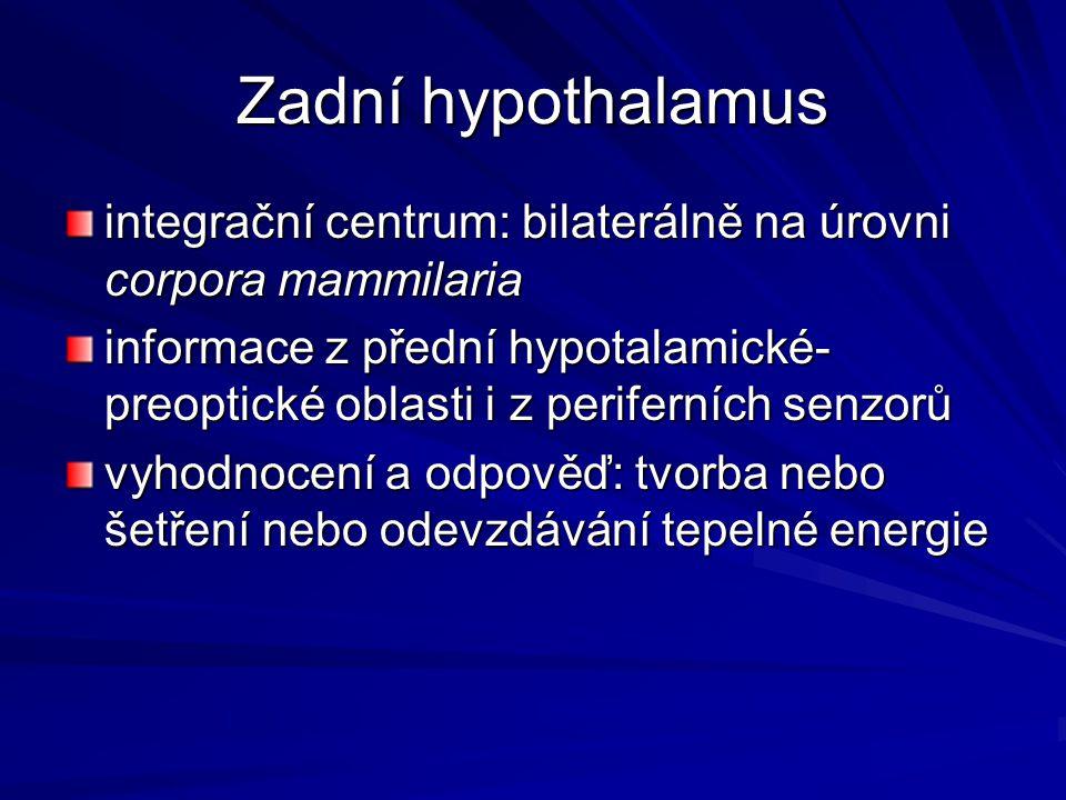 Zadní hypothalamus integrační centrum: bilaterálně na úrovni corpora mammilaria.