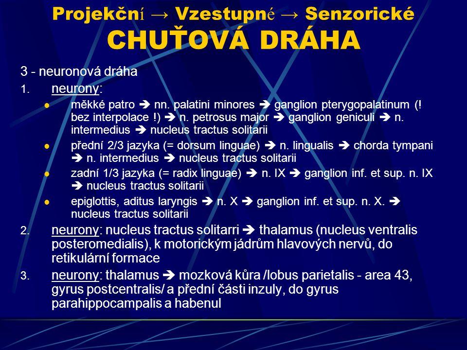Projekční → Vzestupné → Senzorické CHUŤOVÁ DRÁHA