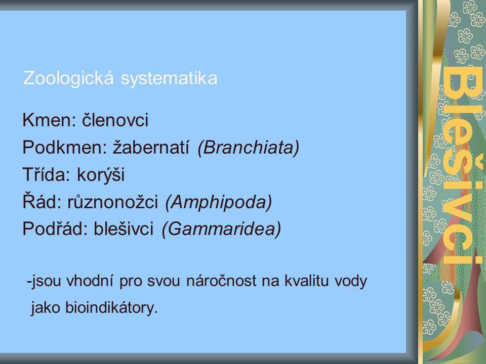 Blešivci Zoologická systematika Kmen: členovci