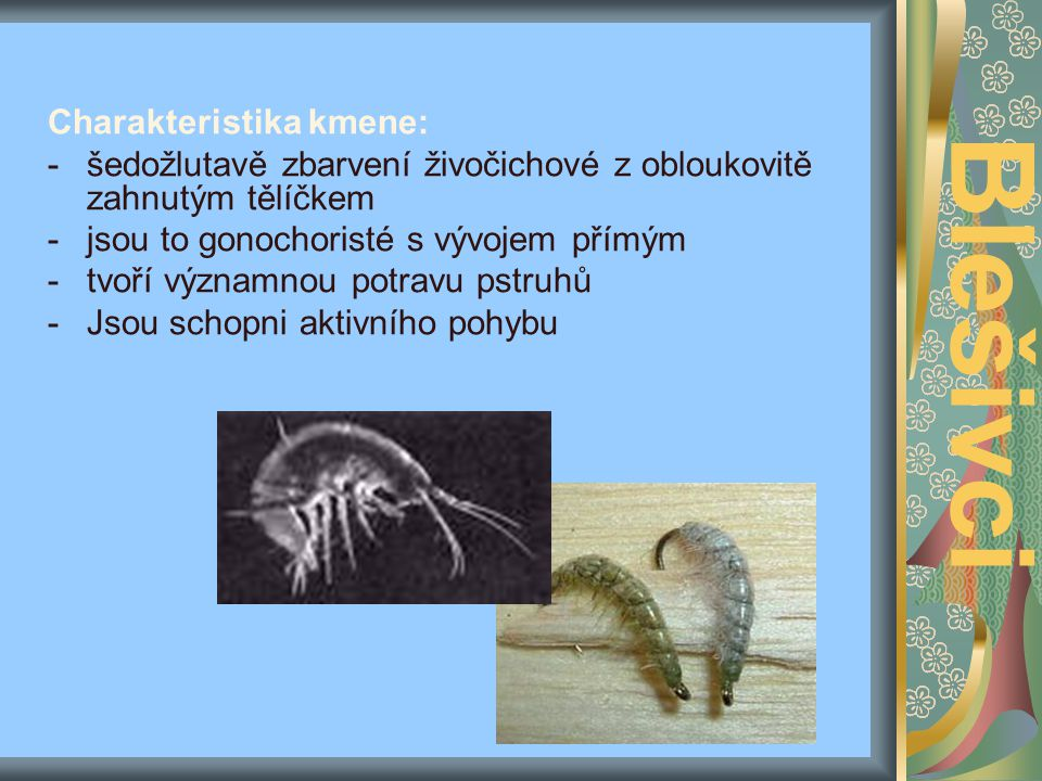 Blešivci Charakteristika kmene: