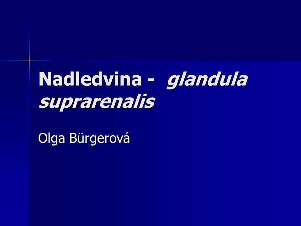 Nadledvina - glandula suprarenalis