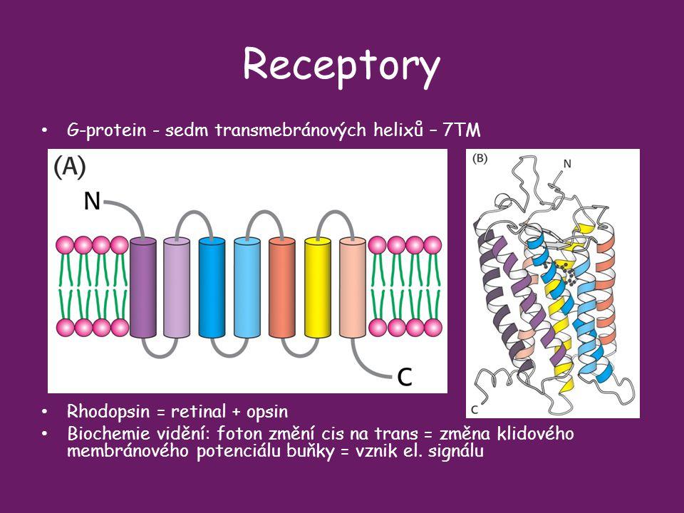 Receptory G-protein - sedm transmebránových helixů – 7TM