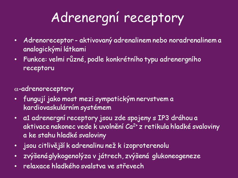 Adrenergní receptory Adrenoreceptor - aktivovaný adrenalinem nebo noradrenalinem a analogickými látkami.