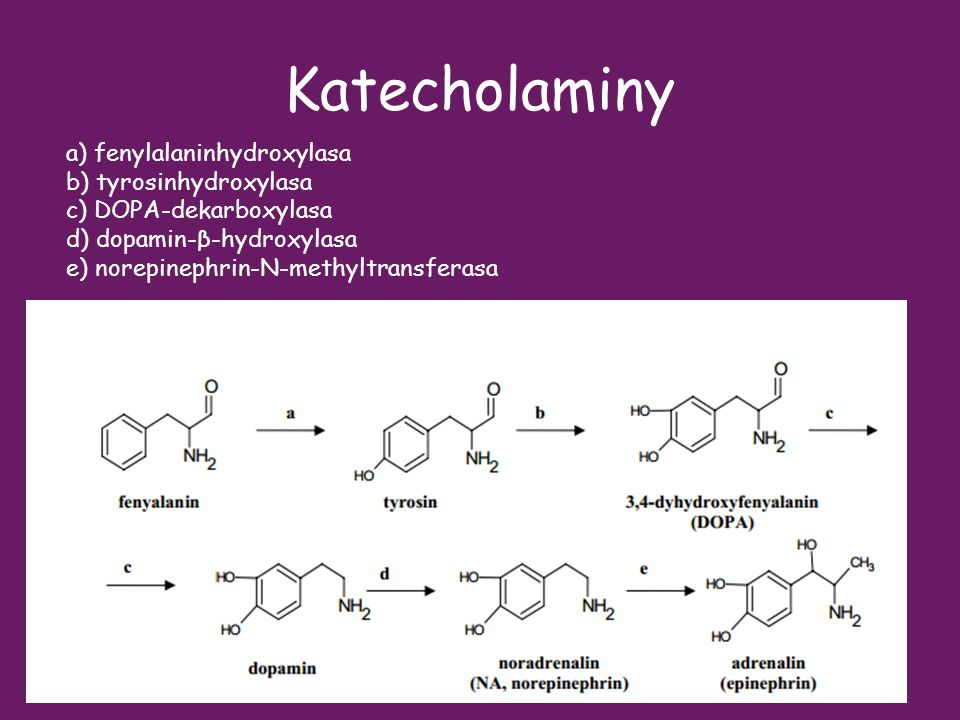 Katecholaminy a) fenylalaninhydroxylasa b) tyrosinhydroxylasa
