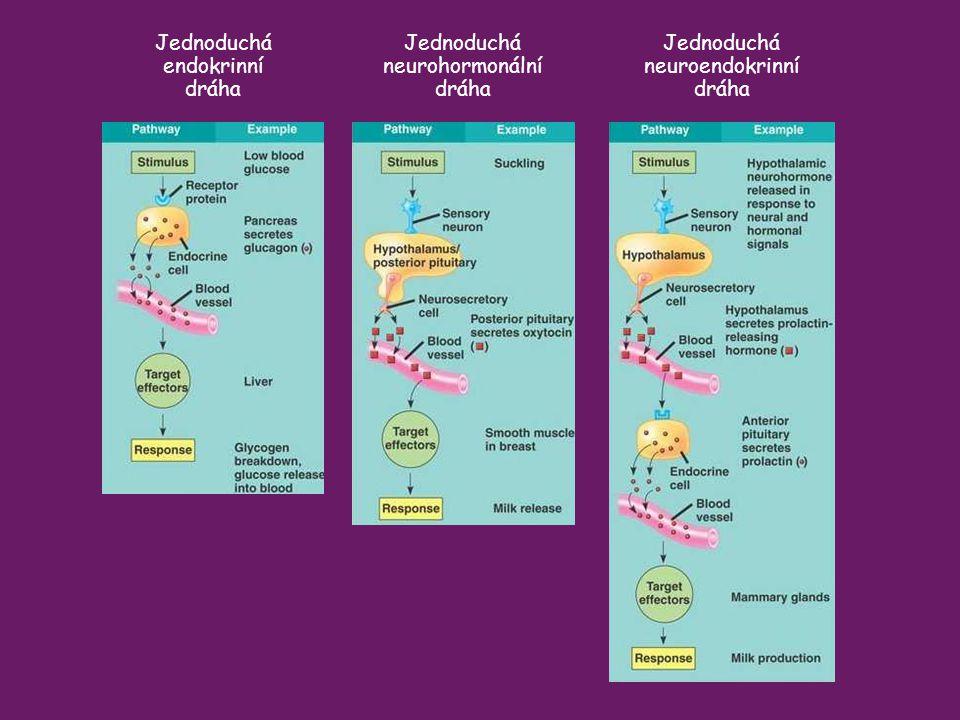 Jednoduchá endokrinní dráha Jednoduchá neurohormonální dráha Jednoduchá neuroendokrinní dráha