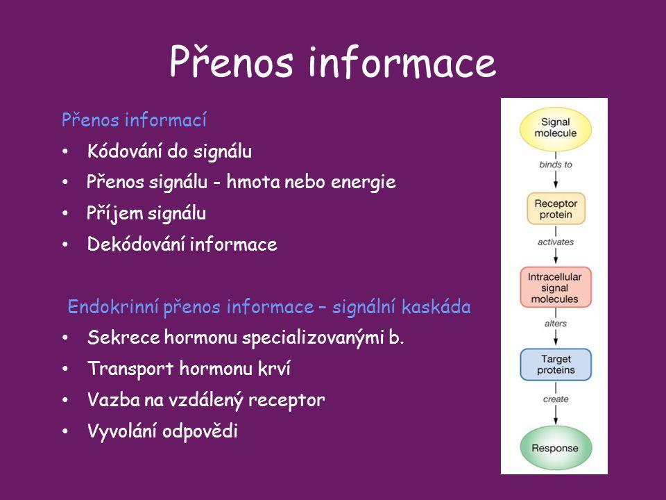 Přenos informace Přenos informací Kódování do signálu