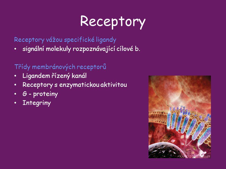 Receptory Receptory vážou specifické ligandy